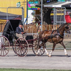 2020 Canberra Royal - Harness Horses
