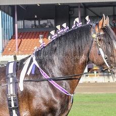 2020 Canberra Royal - Led Shire