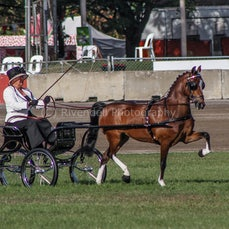 2020 Canberra Royal - Light Harness Ponies