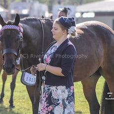 2020 Canberra Royal - Led & Ridden Standardbred