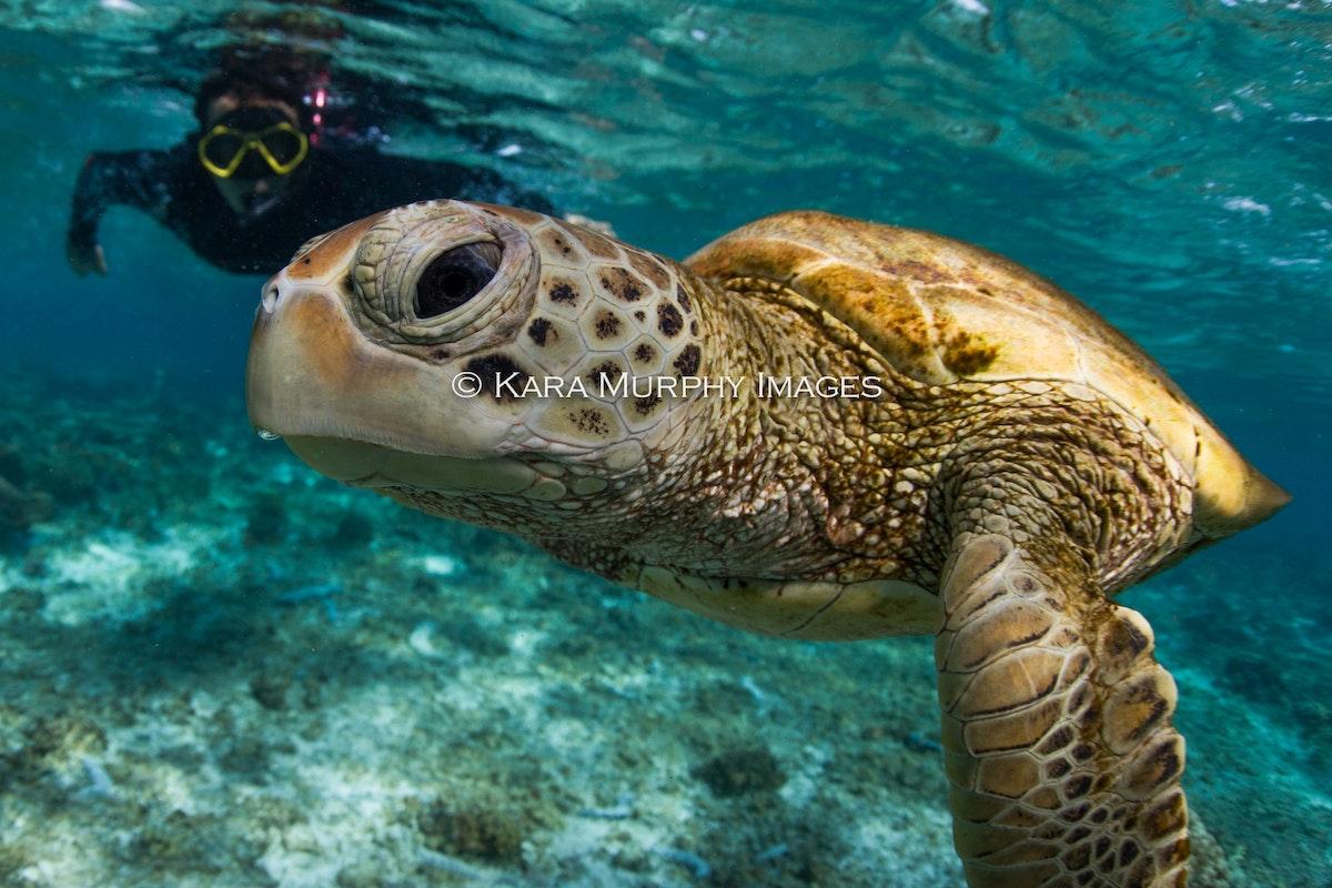 turtle hero2