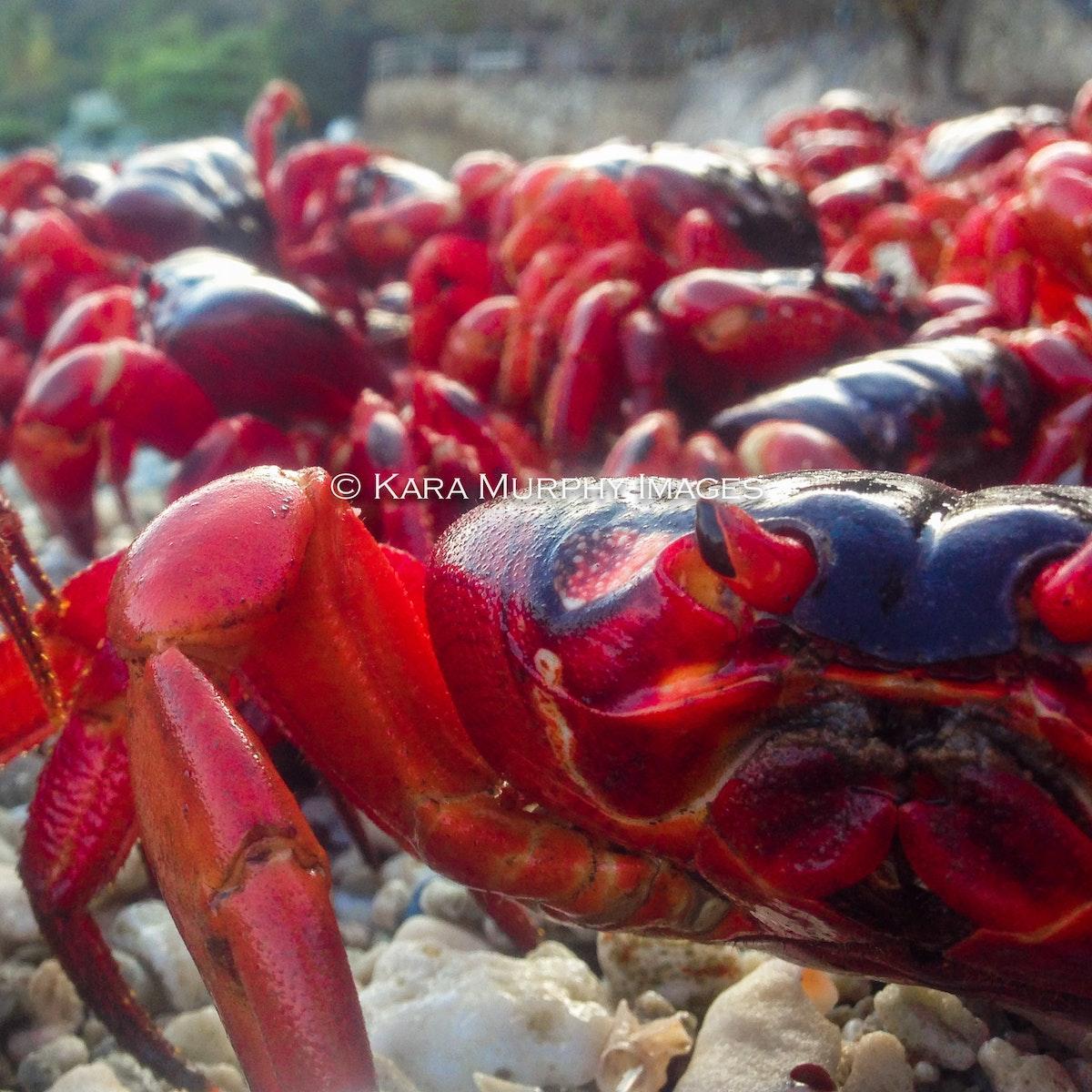 crab hero