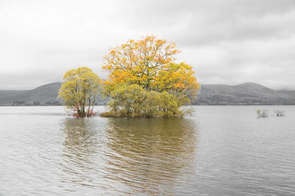 Loch Lomond - Autumn leaves on Loch Lomond