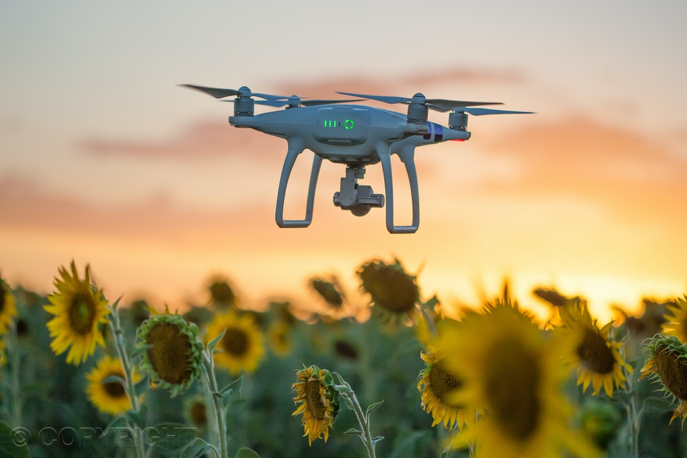 Drone sunset and sunflowers