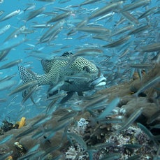 Underwater Photography - A selection of underwater images.