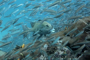 Underwater Photography - Selection of images for general viewing