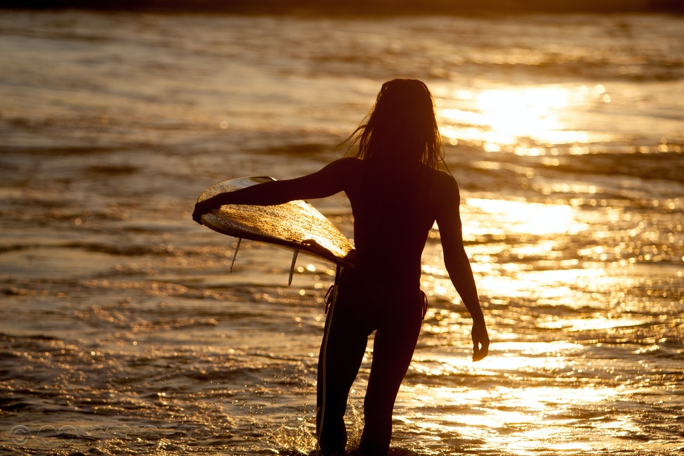 Female surfer sunset - Silhouette of female surfer with board entering the golden ocean at sunset.