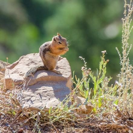 Bryce Canyon Trip-144