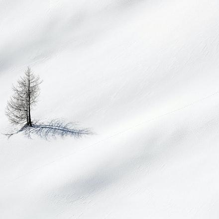 051---Dolomites---Cinque-Torri---070219-1150-Edit-copy