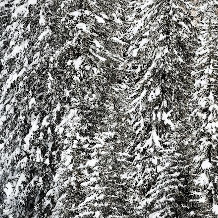 046---Dolomites---Misurina---050219-0869-Edit-copy