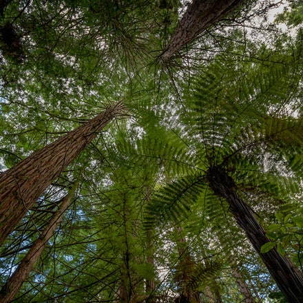 2019 Around Rotorua