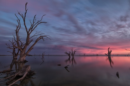 Morning Warmth - South Australian sunrise in the riverland