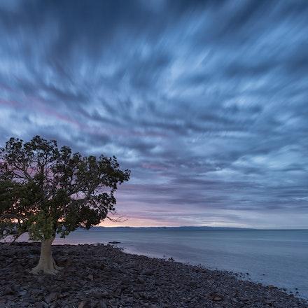 Douglas Point Tree on first light