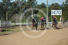 Race 4 Revelio