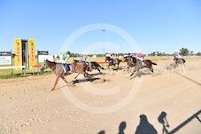 Race 5 Palace Tycoon