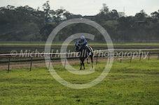 Arabian Race 1 Djehlbi