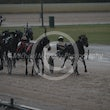 Race 7 Darby Brights