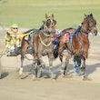 Race 8 Franco Totem