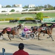 Race 8 Comply or Die