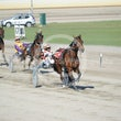 Race 5 Newport Dreams