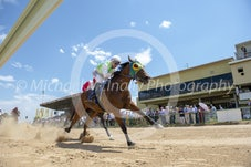 Race 1 Sixty One Tigers