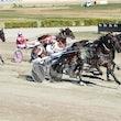 Race 2 Newmerella Sharkie