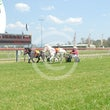 Mini  Trotters Race 1 Twist of Fate