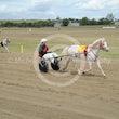 Mini Trotters Race 1 Twist of Fate