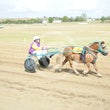 Mini Trotters Race 3 Cool Hand Duke