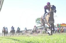 Race 5 Colpo Di Tamburo
