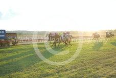 Race 6 Fast Arli