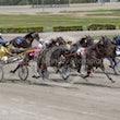 Race 1 Royal Taz