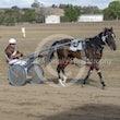 Race 6 Newmerella Molly