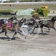 Race 6 Ruthless Armbro