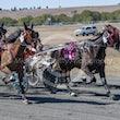 Race 1 Norahs Fling