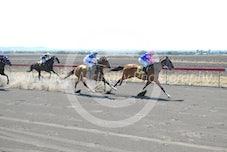 Race 1 Letitrippotatochip