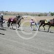 Race 1 Mister Decorum