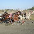 Race 9 Rowdys Ace