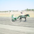 Mini Trotters Race 2 Shecaughtmyeye