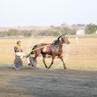 Race 8 Topnotch Mach