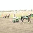 Mini Trotters Race 3 Shecaughtmyeye
