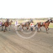 Race 5 Studleigh Will