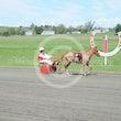 Mini Trotters Race 2 Smokin' Hot