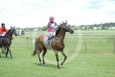 Race 4 Studly Rooster