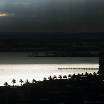 Palm Trees on the Bay, St Kilda - Looking down on the palm trees lining Port Philip Bay, St Kilda
