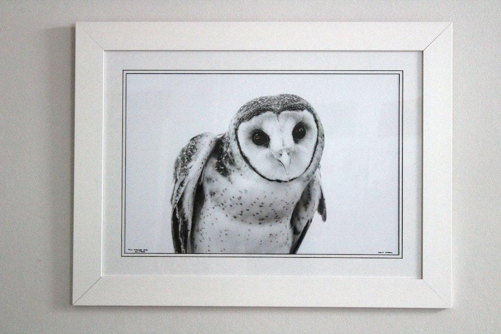 TIWI MASKED OWL 16X24