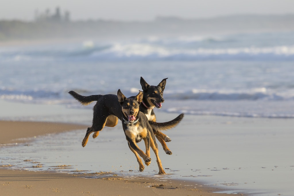 Dogs on the Beach 1 - Action photography of your adored dog doing what they love best by Jude Conning Pet Photography.