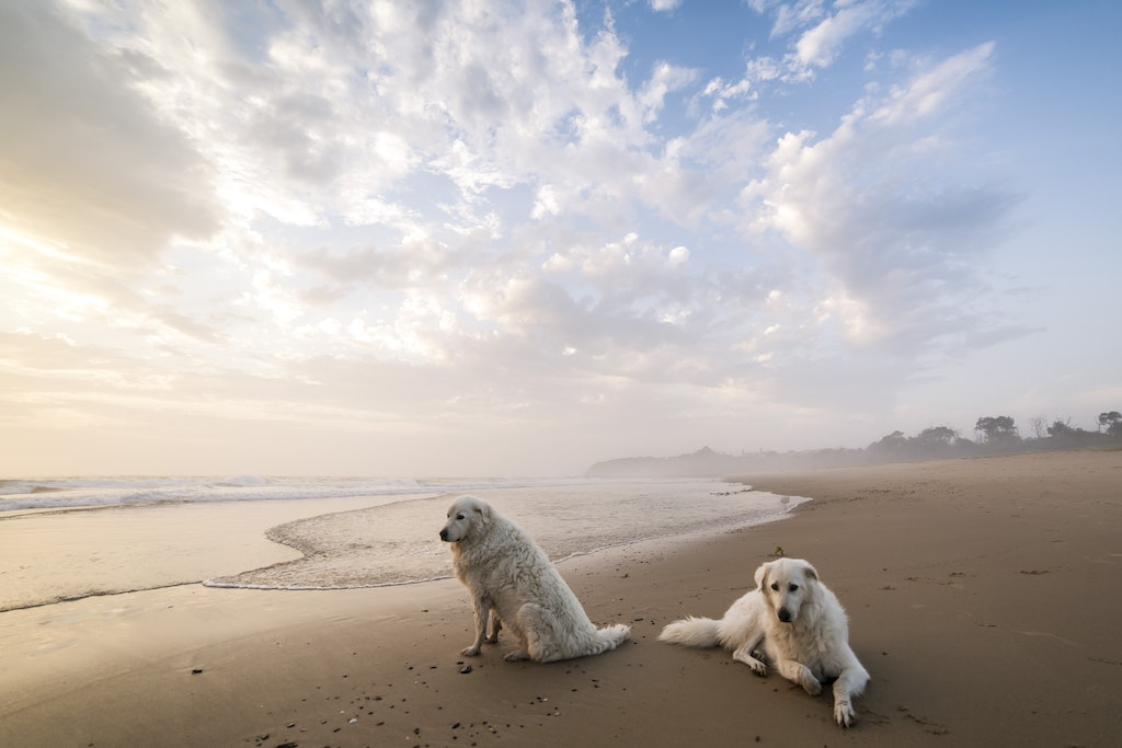 Dogs-61 - Fine art photography of your adored dog by Jude Conning dog Photography