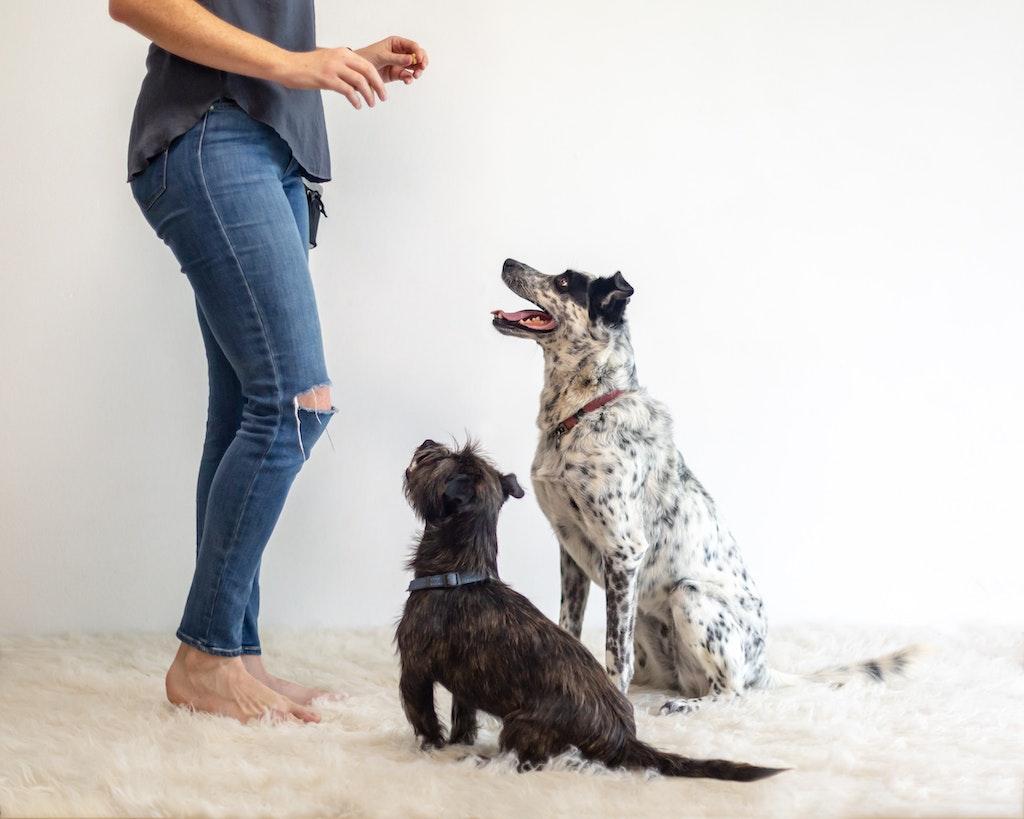 Studio Dogs-1