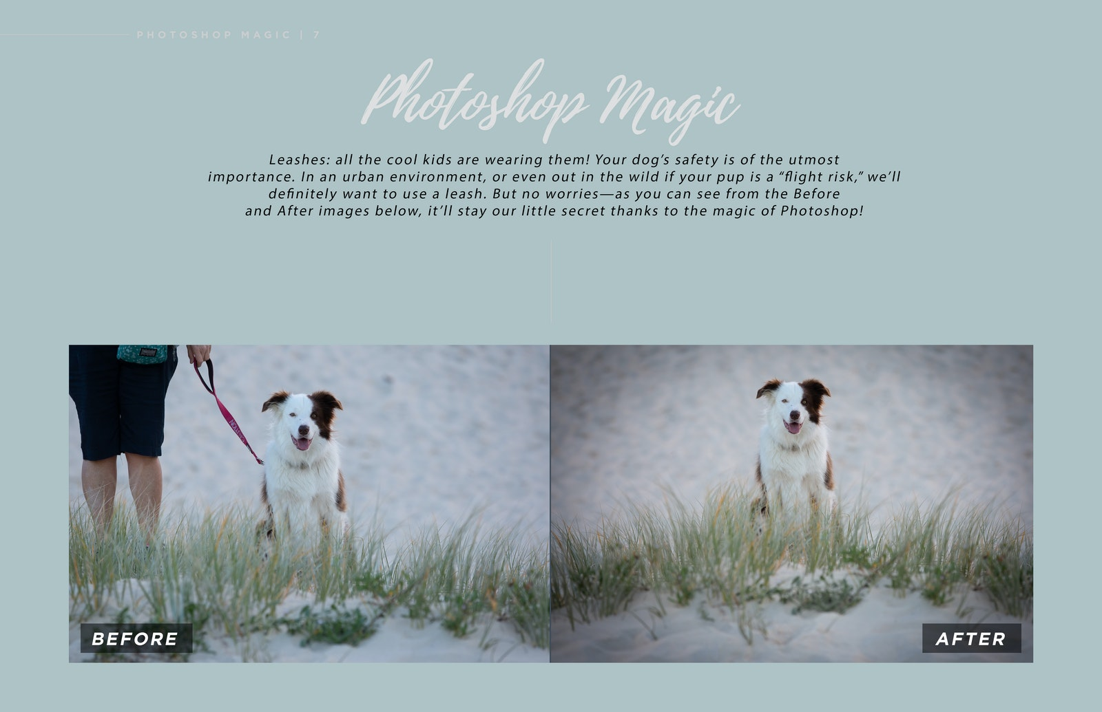Inquiry Guide Double Page Spread Leash Removal_05